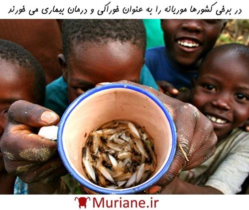 زندگی موریانه ها