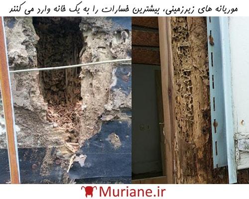 موریانه های زیر زمینی بیشترین خسارت را به یک خانه وارد می کنند