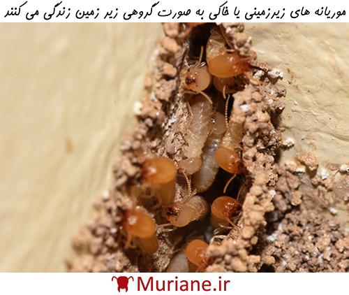 خسارات ناشی از موریانه ها