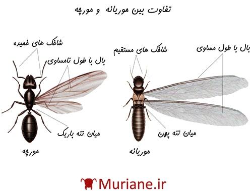 تفاوت های موریانه و مورچه