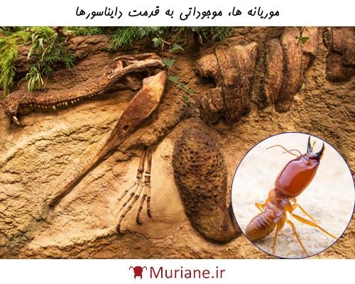 موریانه