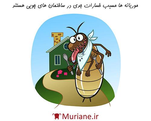 دشمن موریانه ها