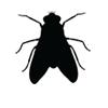 fly—black-logo