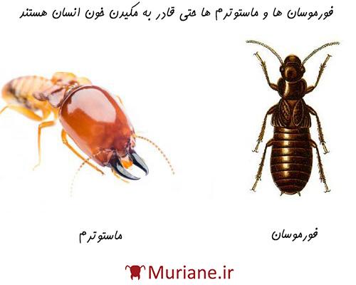 برخی گونه های موریانه وجود دارند که از خون انسان تغذیه می کنند