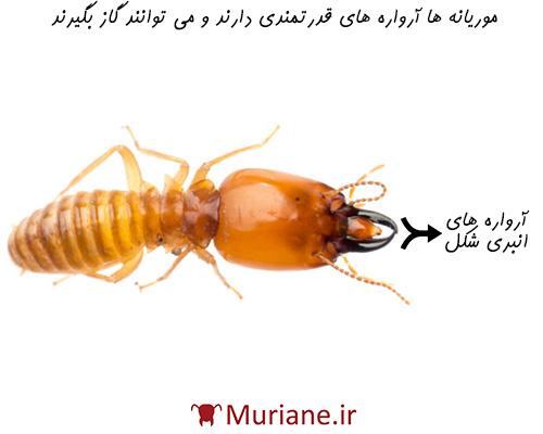 موریانه ها با آرواره های قدرتمندی که دارند می توانند گاز بگیرند