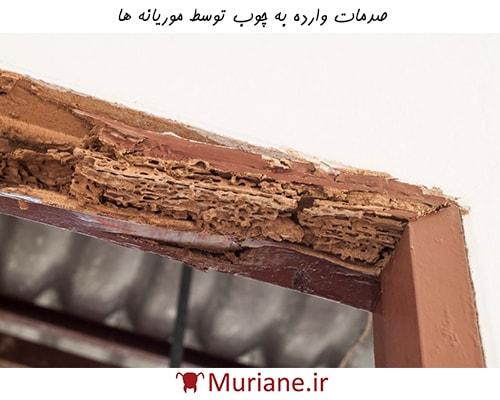 صدمات وارده به چوب توسط موریانه ها