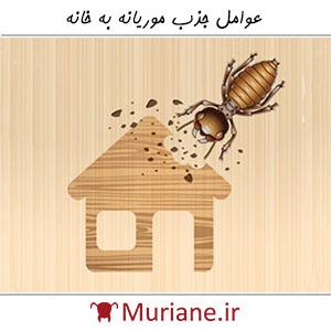 عوامل جذب موریانه به خانه