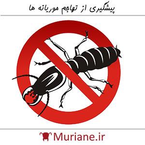 پیشگیری از تهاجم موریانه ها