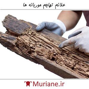 علائم تهاجم موریانه ها