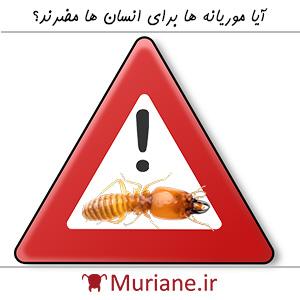 آیا موریانه ها برای انسان ها مضرند؟